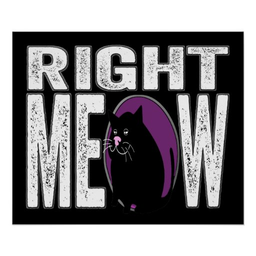 Right MEOW! Funny Kitty Cat Language Poster