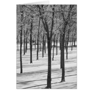 Rime in the Trees Winter Notecard