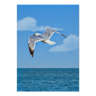 Ring-billed Gull in Flight Print or Poster