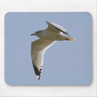 Ring-billed gull Mousepad