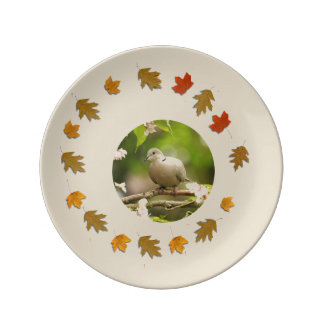 Ring Neck Dove Plate