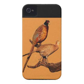 Ring-neck Pheasant iPhone 4 Case-Mate Cases