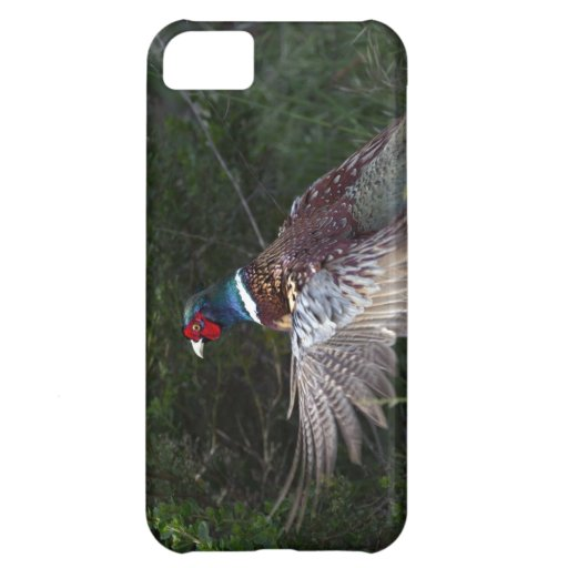 Ring Necked Pheasant iPhone 5C Cover