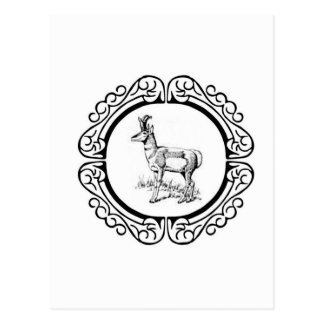 ring of pronghorn postcard