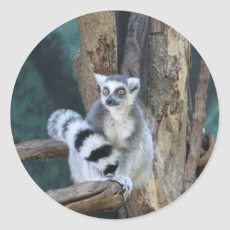 Ring-tailed lemur classic round sticker