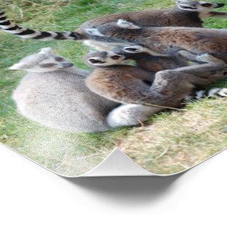 Ring Tailed Lemur Family Photo Art