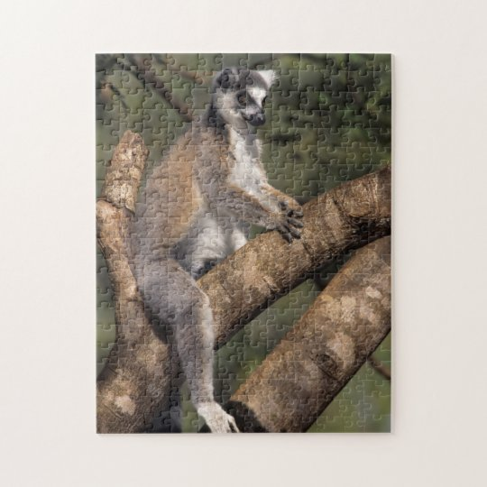 Ring-Tailed Lemur (Lemur Catta), Berenty Jigsaw Puzzle