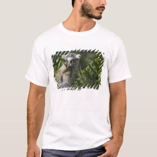 Ring tailed lemur (Lemur catta), Madagascar T-Shirt