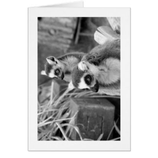 Ring-tailed lemur with baby black and white card