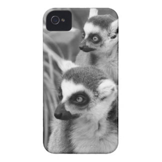 Ring-tailed lemur with baby black and white iPhone 4 cases