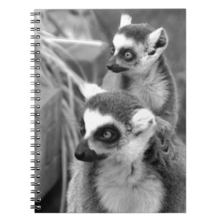 Ring-tailed lemur with baby black and white notebook