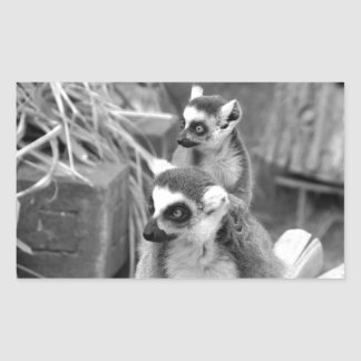 Ring-tailed lemur with baby black and white rectangular sticker