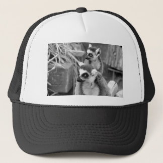 Ring-tailed lemur with baby black and white trucker hat