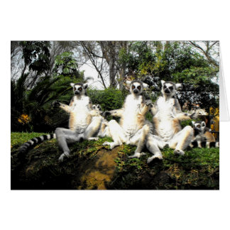 Ring tailed lemurs warming up in spring card