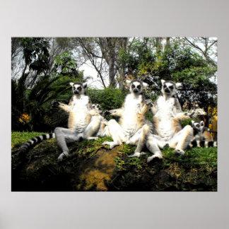 Ring tailed lemurs warming up in spring poster