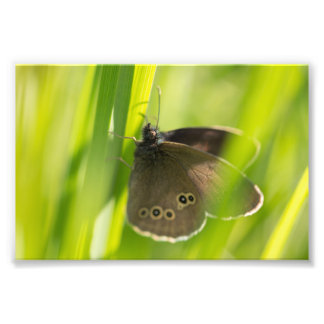 Ringlet Butterfly Photo Print