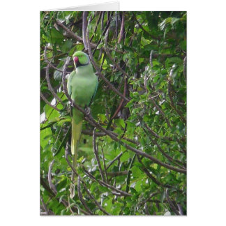 Ringnecked Parakeet Card