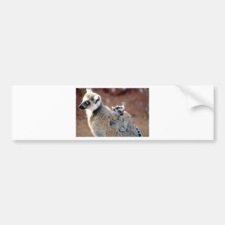 Ringtail Lemur And Baby Bumper Sticker