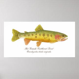 Rio Grande Cutthroat Trout Art Poster