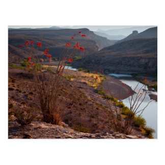 Rio Grande Running Through Chihuahuan Desert Postcard