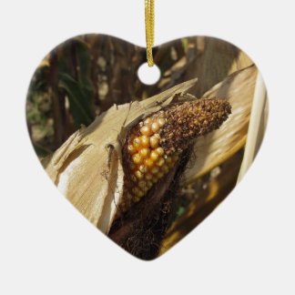 Ripe and ready to harvest ear of corn ceramic ornament