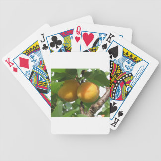 Ripe apricots hanging on the tree . Tuscany, Italy Bicycle Playing Cards