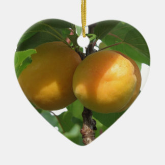 Ripe apricots hanging on the tree . Tuscany, Italy Ceramic Ornament