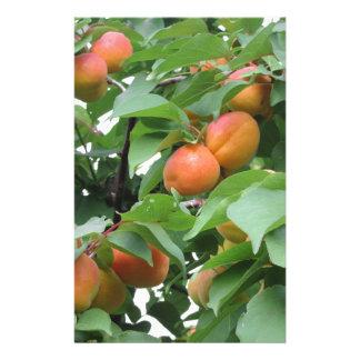 Ripe apricots hanging on the tree . Tuscany, Italy Customized Stationery