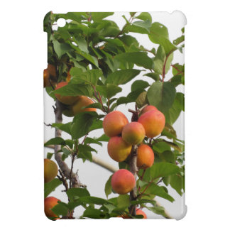 Ripe apricots hanging on the tree . Tuscany, Italy iPad Mini Cases