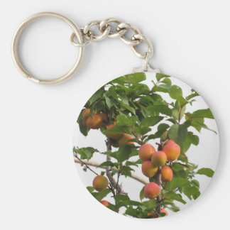 Ripe apricots hanging on the tree . Tuscany, Italy Key Ring