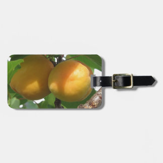 Ripe apricots hanging on the tree . Tuscany, Italy Luggage Tag