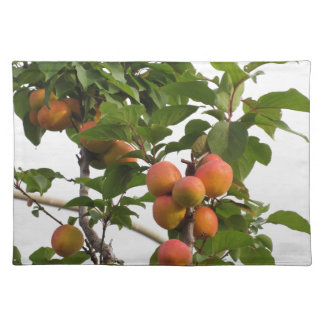 Ripe apricots hanging on the tree . Tuscany, Italy Placemat