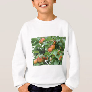 Ripe apricots hanging on the tree . Tuscany, Italy Sweatshirt