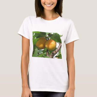 Ripe apricots hanging on the tree . Tuscany, Italy T-Shirt