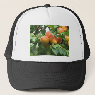 Ripe apricots hanging on the tree . Tuscany, Italy Trucker Hat
