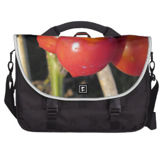 Ripe tomatoes on a branch laptop commuter bag