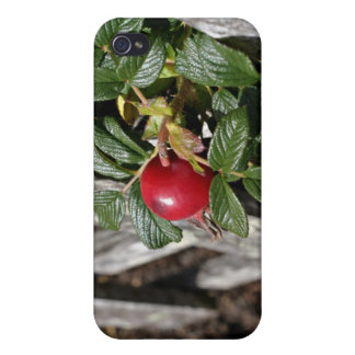 Ripen Rose hip on trellis iPhone 4/4S Covers