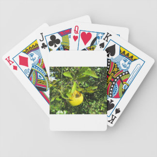 Ripening Citrus Card Deck