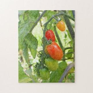 Ripening tomatoes jigsaw puzzle