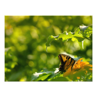 Ripple Butterfly Print Photo Print