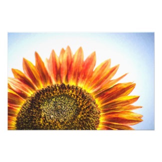 Rising Sunflower Photo Print