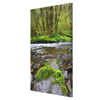 River in green forest, Oregon Canvas Print