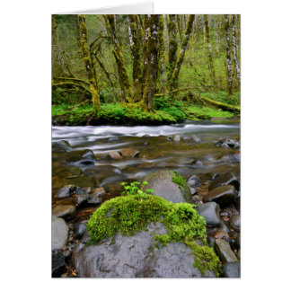 River in green forest, Oregon Card