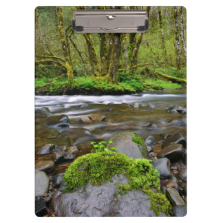River in green forest, Oregon Clipboard
