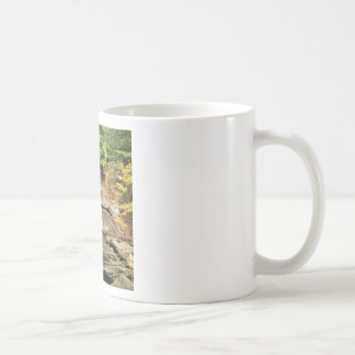River Pikes Falls Windham County Vermont Mugs