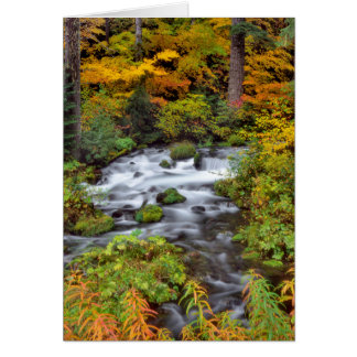 River through forest, Fall, Oregon Card