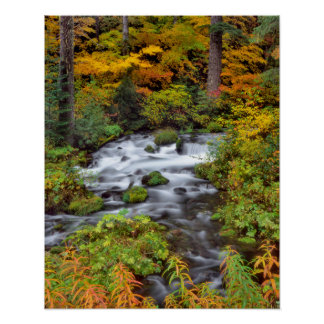 River through forest, Fall, Oregon Poster