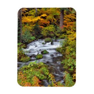 River through forest, Fall, Oregon Rectangular Photo Magnet