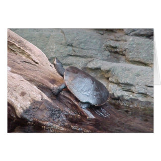River Turtle Card
