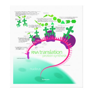 RNA Translation in Protein Synthesis Diagram Stretched Canvas Print